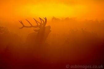 Misty morning roar